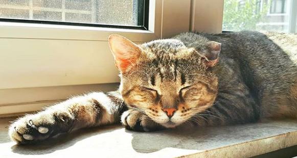 carcinoma en los gatos