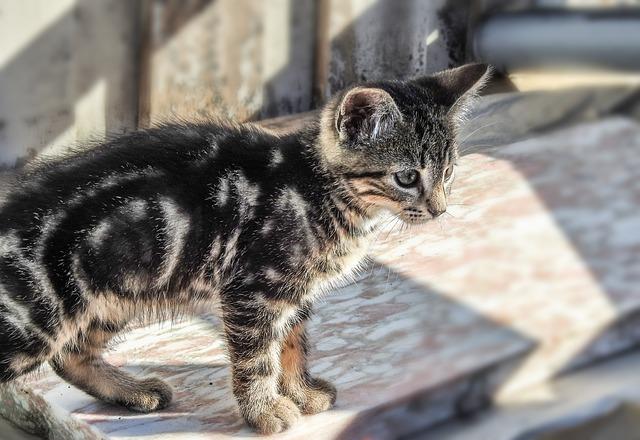 yodo radioactivo gatos