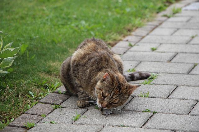 fibra para diabetes gato