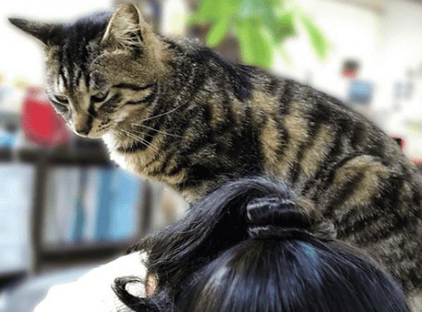¿Por qué tu gato🐱camina o se sube sobre tu espalda?