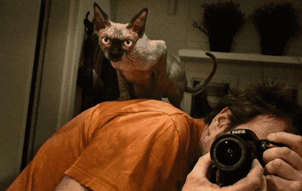 gato no me deja en paz