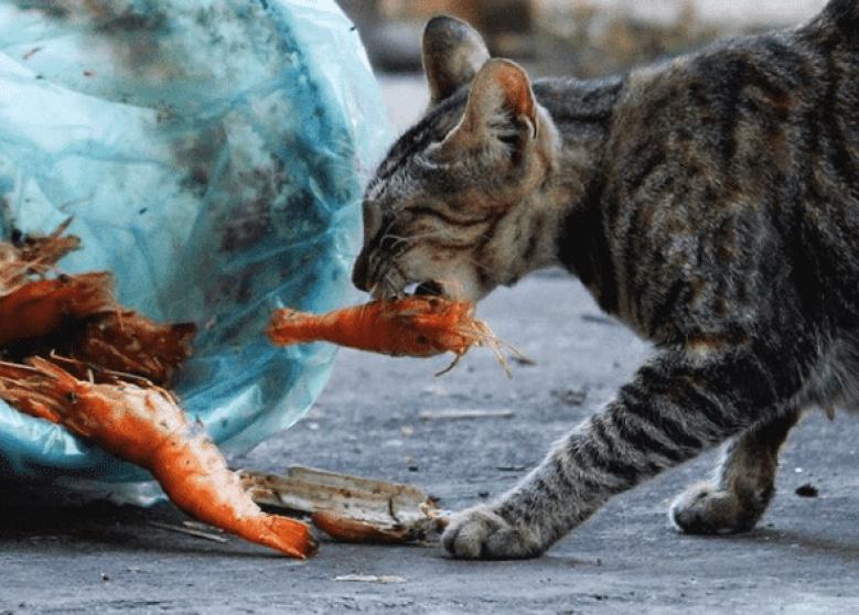 Pueden Comer Gambas Los Gatos Entra Y Descúbrelo Migatapersa