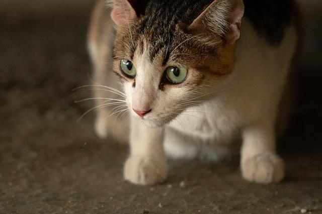 gatos con problemas motrices