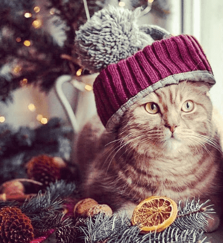 gato en invierno