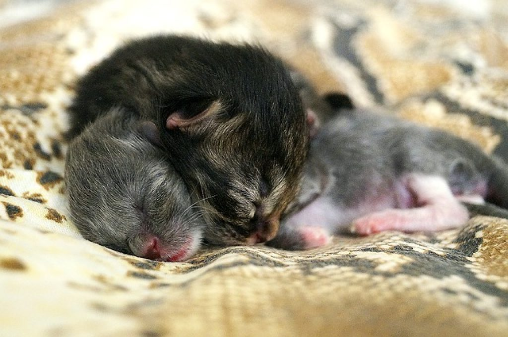 gata trae gatitos a mi cama