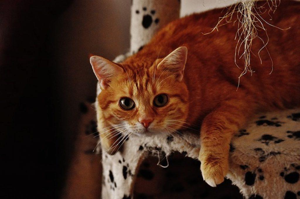 gatos son crepusculares