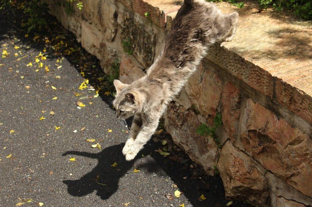gato cae de pie