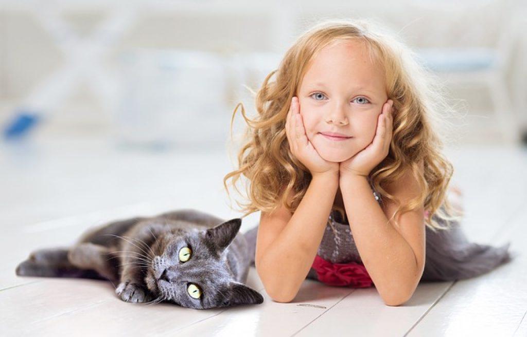 gatos tienen apego con los humanos