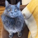 gato ojos cruzados