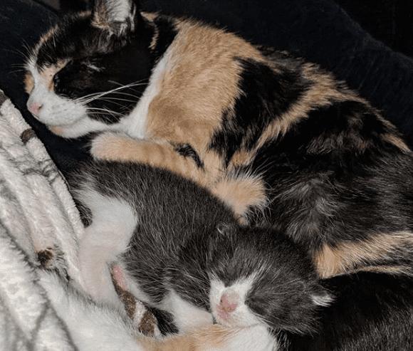 gata parió solo un gatito