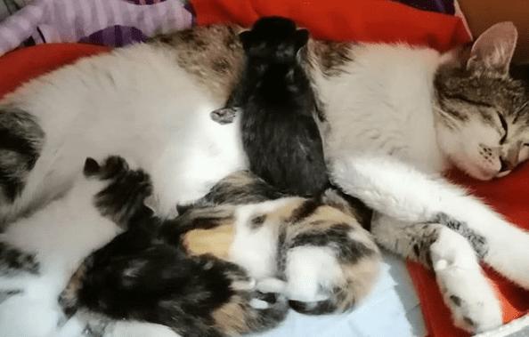post parto de una gata