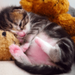 una gata puede tener un solo gatito