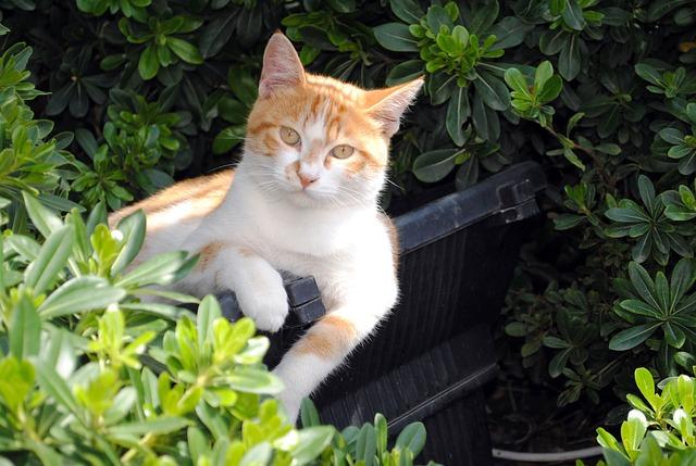 disfuncion propioceptiva felina