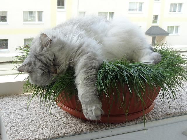 plantas venenosas para gatos
