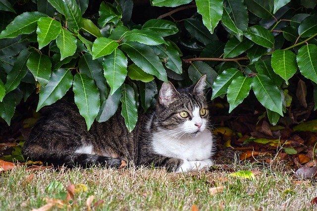 repelente naturales gatos