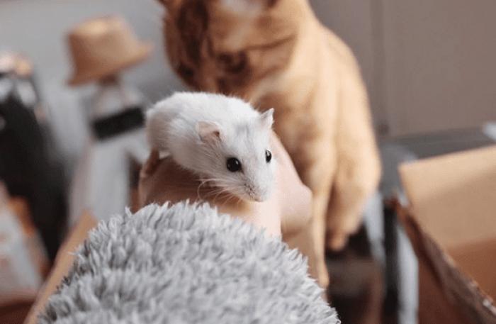 convivencia gato y hamster