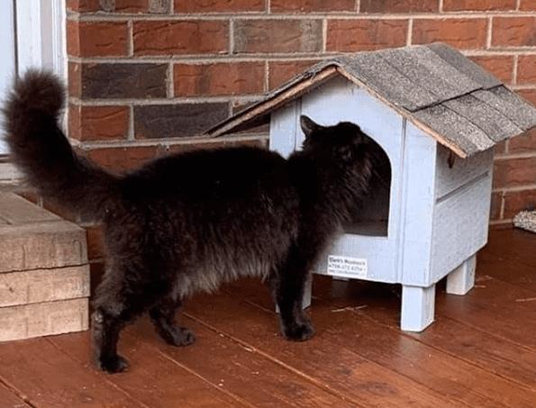 recinto exterior para gatos