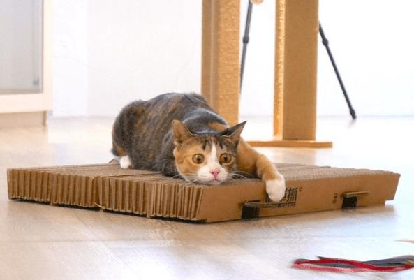 rascador cartón