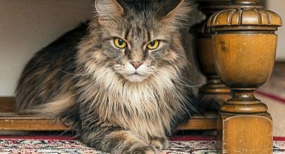 Cómo evitar que tu gato arañe muebles.✌️Cinco pasos para lograrlo