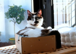 ¿Por qué a los gatos les gustan las cajas de cartón?