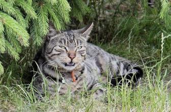 Todo lo que debes saber de la Rabia en gatos