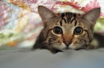 Mi gato me tiene miedo. Consejos para tranquilizar a un gato asustado