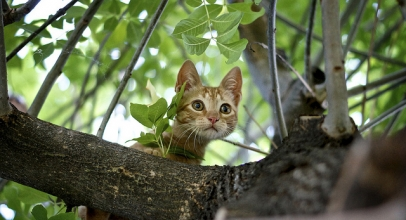 ¿Por qué los gatos suben a los árboles? Aquí te lo explico