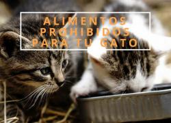 Alimentos mortales para gatos. Entra y descúbrelo