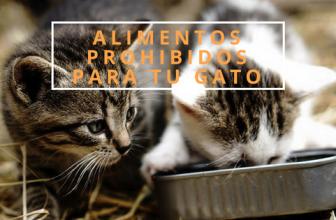 Alimentos mortales para gatos. Entra y descubre