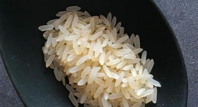¿Los gatos pueden comer arroz? Entra y descúbrelo
