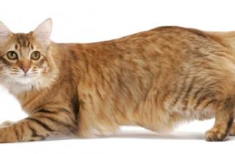 La bolsa primordial de los gatos 🐱 ¿Para qué les sirve?