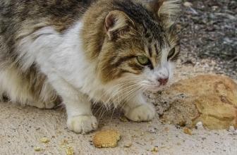 ¿Crees que es necesaria la fibra para los gatos?
