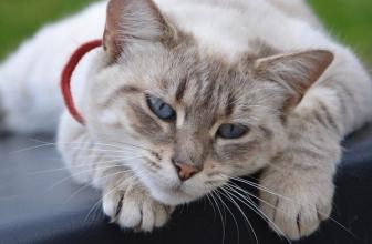 8 señales de que tu gato está aburrido
