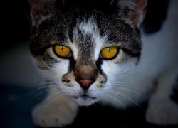 ¿Pasa algo si mi gato come moscas y otros insectos😢?