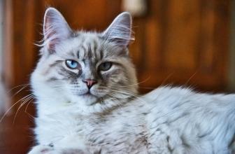 ¿Cuánta memoria crees que tiene tu gato?🐱 Te sorprenderás