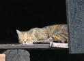 ¿Cuántos años pueden vivir nuestros gatos?