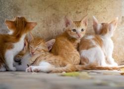 ¿Las gatas sufren cuando las separan de sus crías?