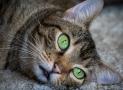 La displasia de cadera en gatos. Causas, síntomas y tratamiento