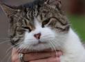Pancreatitis en los gatos. Causas, síntomas y tratamiento.