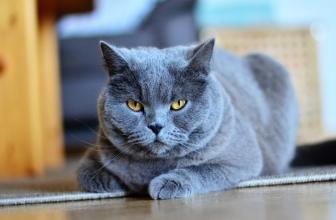 Cómo piensan los gatos. Su conexión gato dueño