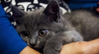 Recuperación y cuidados después de castrar un gato macho