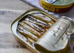 ¿Los gatos pueden comer sardinas enlatadas? Entra y compruébalo