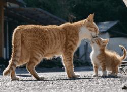 ¿Qué hacer si mi gata tiene dentro un gatito muerto después del parto?