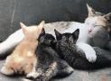 Metritis en las gatas. Síntomas, causas y tratamiento.