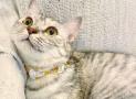 ¿Cuáles son los beneficios de poner un collar a tu gato?