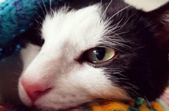 ¿Por qué a tu gato le lloran los ojos? Aquí te lo explico