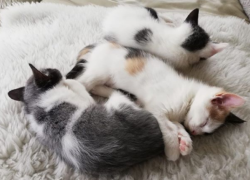 ¿A que edad los gatitos empiezan a caminar?