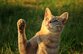Cómo corregir a tu gato. Refuerzo positivo con los gatos