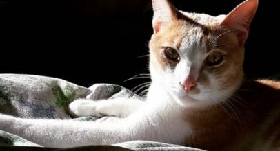 Los gatos disfrutan al sol. Cuidados a tener en cuenta.