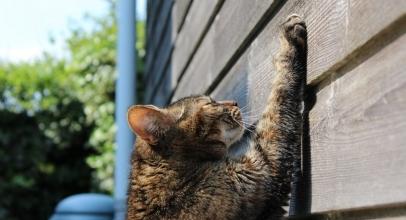 Cómo hacer que tu gato obedezca. 8 pasos que debes seguir